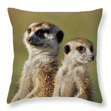 Meerkat Duo Throw Pillow by Bruce W Krucke