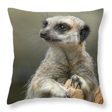 Meerkat Model Throw Pillow