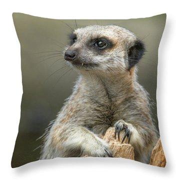 Meerkat Model Throw Pillow