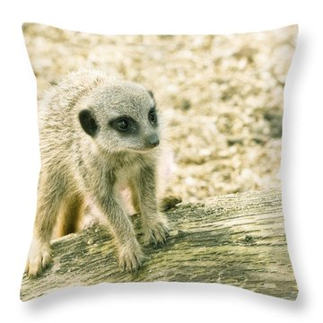 Meerkat - Portrait Throw Pillow