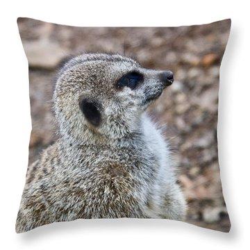 Meerkat Portrait Throw Pillow by Douglas Barnett