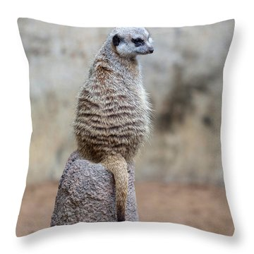 Meerkat Sitting And Looking Right Throw Pillow