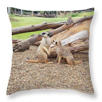 Meerkats  Throw Pillow