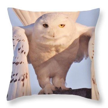 Meet Roofus Throw Pillow