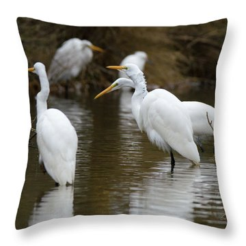 Meeting Of The Egrets Throw Pillow