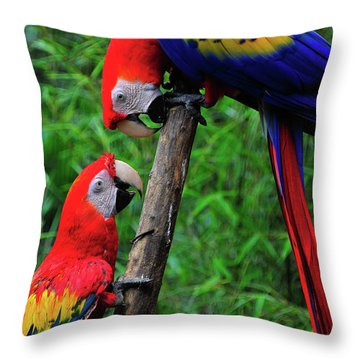 Meeting Of The Macaws  Throw Pillow by Harry Spitz