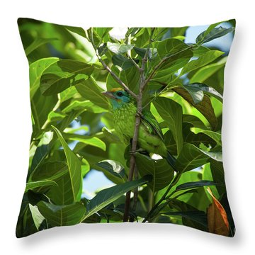 Megalaima Flavifrons Throw Pillow by Venura Herath
