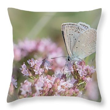 Meleagers Blue Butterfly Throw Pillow
