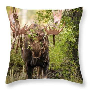 Throw Pillow featuring the photograph Messy Moose by Mary Hone