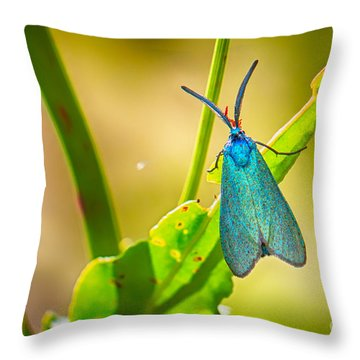 Metallic Forester Moth Throw Pillow