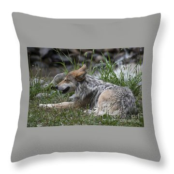 Mexican Wolf 20120714_112a Throw Pillow by Tina Hopkins