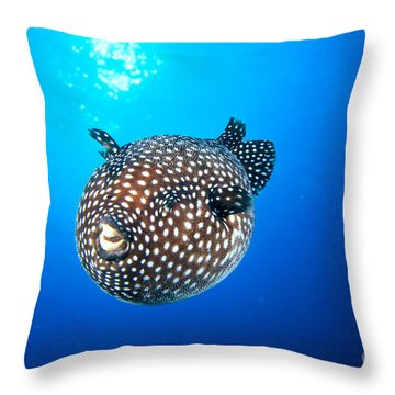 Mexico Guineafowl Puffer Throw Pillow by Dave Fleetham - Printscapes
