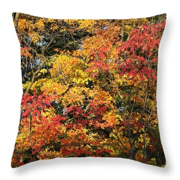 Throw Pillow featuring the photograph Michigan Autumn by Robert Pearson