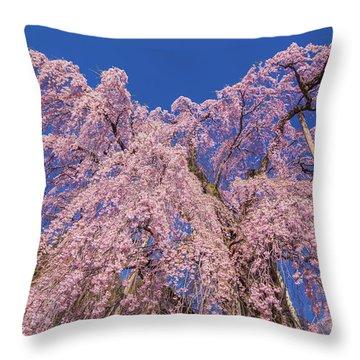 Throw Pillow featuring the photograph Miharu Takizakura Weeping Cherry30 by Tatsuya Atarashi