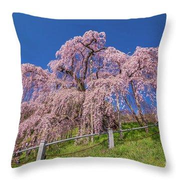 Throw Pillow featuring the photograph Miharu Takizakura Weeping Cherry0565 by Tatsuya Atarashi