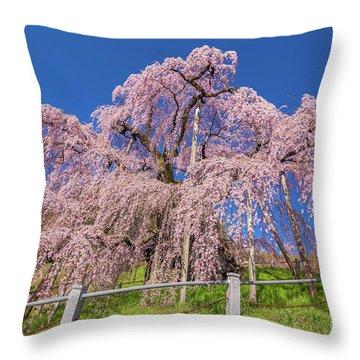 Throw Pillow featuring the photograph Miharu Takizakura Weeping Cherry31 by Tatsuya Atarashi