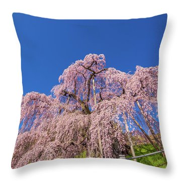 Throw Pillow featuring the photograph Miharu Takizakura Weeping Cherry32 by Tatsuya Atarashi