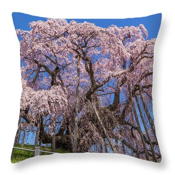 Throw Pillow featuring the photograph Miharu Takizakura Weeping Cherry55 by Tatsuya Atarashi