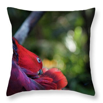 Miksang 4 Parrot Throw Pillow by Theresa Tahara