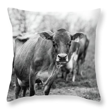 Milk Cow Stowe Vermont In Black And White Throw Pillow