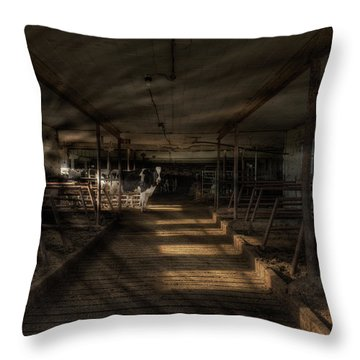 Milk Cows In Radiant Light Throw Pillow