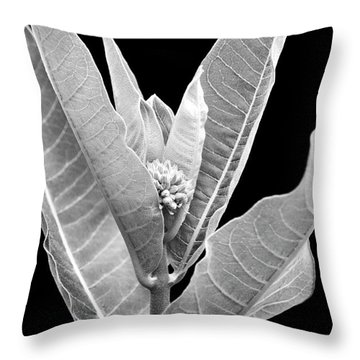 Throw Pillow featuring the photograph Milkweed Black And White by Christina Rollo