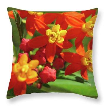 Milkweed Flowers Throw Pillow by Melinda Saminski