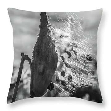 Milkweed Pod Back Lit B And W Throw Pillow