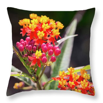 Milkweed Silky Deep Red Throw Pillow by Louise Heusinkveld