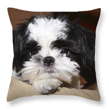 Milo Throw Pillow by Teresa Zieba