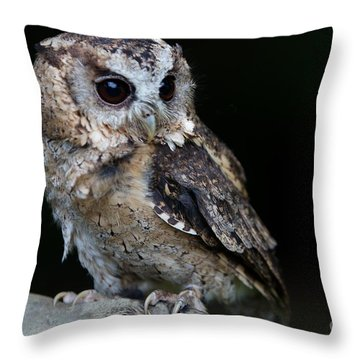 Minature Owl Throw Pillow by Gary Bridger