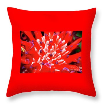 Throw Pillow featuring the photograph Flaming Torch Bromeliad By Kaye Menner by Kaye Menner
