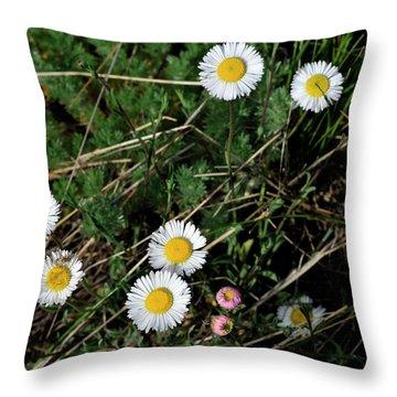 Mini Daisies Throw Pillow
