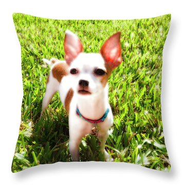 Mini Dog Throw Pillow