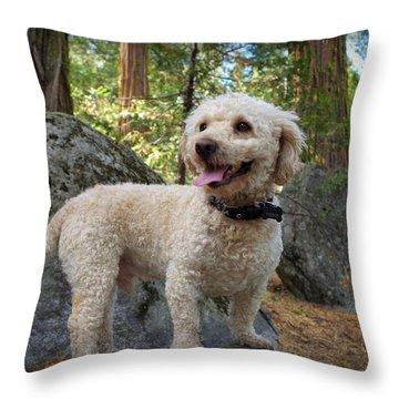 Mini Poodle Throw Pillow