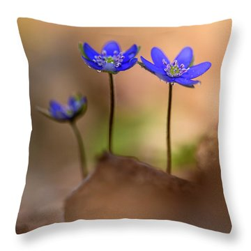 Throw Pillow featuring the photograph Minimalistic Impresion With Liverworts by Jaroslaw Blaminsky