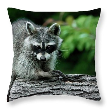 Mischievous Throw Pillow