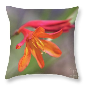 Throw Pillow featuring the photograph Misplaced Beauty by Linda Lees