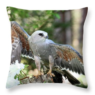 Mississippi Kite Raptor Throw Pillow
