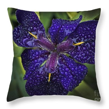 Throw Pillow featuring the photograph Misty Iris by Inge Riis McDonald