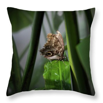 Throw Pillow featuring the photograph Misty Morning Owl by Karen Wiles