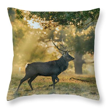 Throw Pillow featuring the photograph Misty Walk by Scott Carruthers