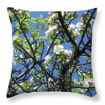 Mn Apple Blossoms Throw Pillow