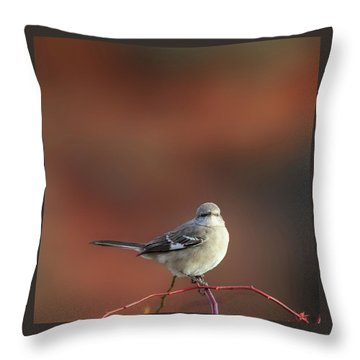 Mocking Bird Morning Square Throw Pillow by Bill Wakeley