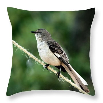 Mockingbird On Rope Throw Pillow