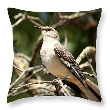 Throw Pillow featuring the photograph Mockingbird  by Sheila Brown