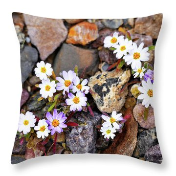 Mojave Desertstar Throw Pillow by Michele Penner