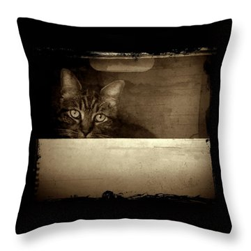 Mollie In A Box Throw Pillow