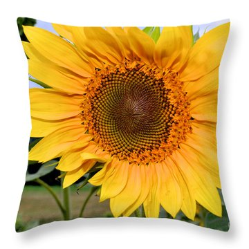 Throw Pillow featuring the photograph Molly by Sandy Molinaro