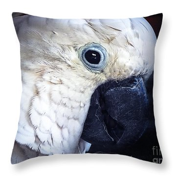 Moluccan Cockatoo Throw Pillow